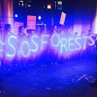 Save Our Southern Forests
