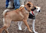 Dog Park 10. Credit: trpnblies7. On Flickr: https://www.flickr.com/photos/trpnblies7/6811773500/