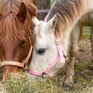 Source: Hope for Horses